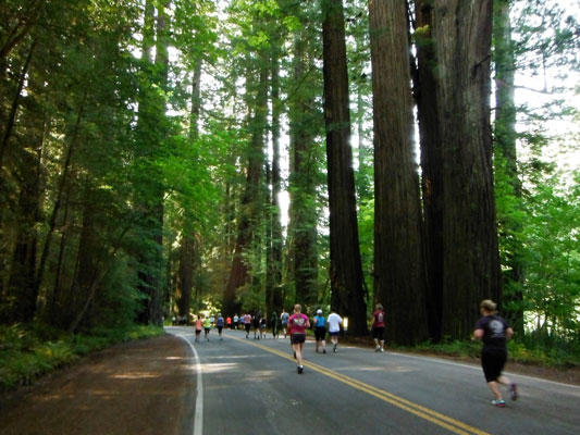 Avenue of the Giants run picture